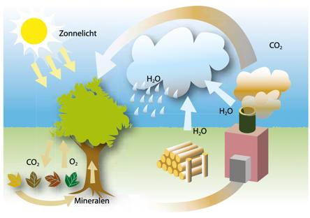 Energie uit biomassa: klimaatneutraal of toch niet?